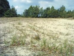 Sandtrockenrasen Achim